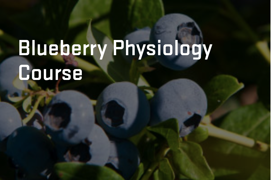 Blueberry Course