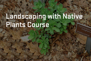 Landscaping with native plants course