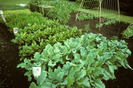 digging-garden6.24